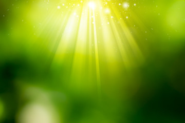 Sunny abstract green nature background.