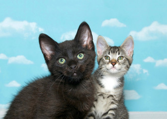 One black kitten with green eyes in foreground with gray and white tabby kitten in background, both looking up above viewer. Focus on kitten in front. Blue background sky with clouds.