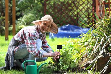 Fototapeta Sadzenie ziół na grządce. Kobieta sadzi rośliny w przydomowym ogródku obraz