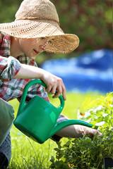 Fototapeta Podlewanie roślin na grządce. Kobieta sadzi rośliny w przydomowym ogródku obraz