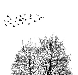 Silhouette flying birds on wood background  illustration