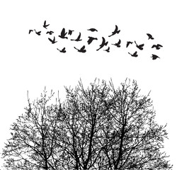 Silhouette flying birds and silhouette tree illustration