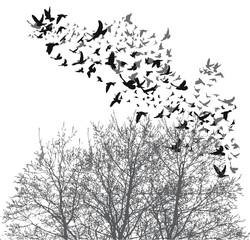 Silhouette flying birds