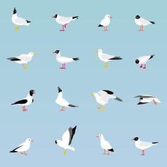 Vector set of beautiful seagulls.
