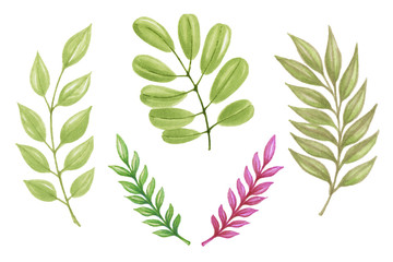 Hand Painting Marker leaves of different plants