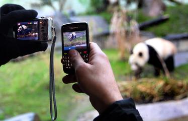 A man takes pictures of Tian Tian, a female giant panda, at Edinburgh Zoo in Edinburgh, Scotland