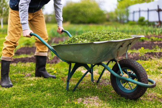 Farmer is holding old wheelbarrow full of grass at green summer garden background.
