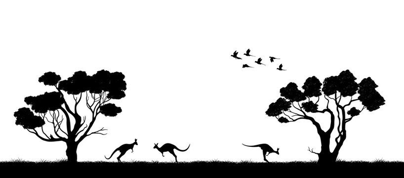 Australian landscape. Black silhouette of trees and kangaroo on white background. The nature of Australia