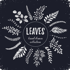 Hand drawn branches collection. Set of sketch style leaves isolated on chalkboard. Vintage ink floral elements. Decorative plants for greeting card and invitation design.