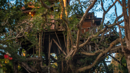 A house on the tree is called...a treehouse