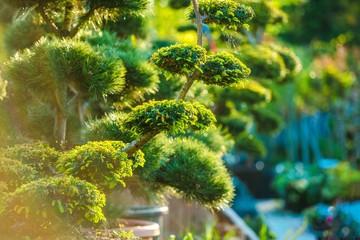 Topiary Art Garden Plants Wall mural