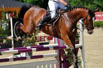 Der Hürdensprung, das Pferd springt über die Hürde