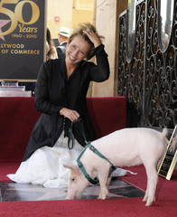 British actress Thompson poses with Monkey the Pig as she is honored for her motion picture career with a star on the Hollywood Walk of Fame, in Hollywood