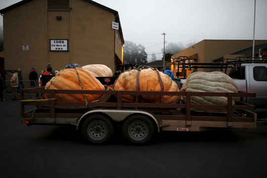 Three pumpkins on a trailer are seen on Main Street during the annual Safeway World Championship Pumpkin Weigh-off in Half Moon Bay, California