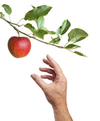 Picking an apple from a tree