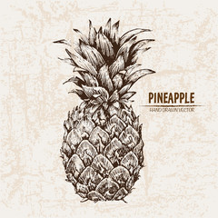 Digital vector detailed line art pineapple fruit hand drawn retro illustration collection set. Thin artistic pencil outline. Vintage ink flat style, engraved simple doodle sketches. Isolated