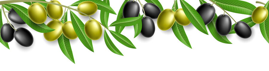 Olive plant banner with green and black olive and leaves, isolated on white. Vector illustration.