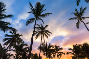 Coconut palm trees and bright evening sky
