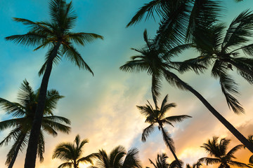 Coconut palm trees and colorful evening sky