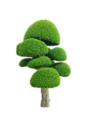 Printed kitchen splashbacks Bonsai tree
