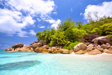 Wall Mural - Tropical beach with palms end rocks in Seychelles, Praslin Island