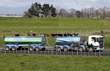 File picture of a Fonterra milk tanker driving past dairy cows as it arrives at Fonterra's Te Rapa plant near Hamilton, New Zealand
