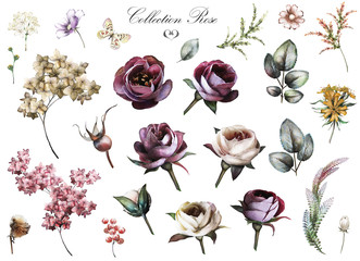 Set elements of rose, hydrangea. Collection garden and wild flowers, branches, illustration isolated on white background. Leaves, bud, herbs, butterfly. Watercolor style
