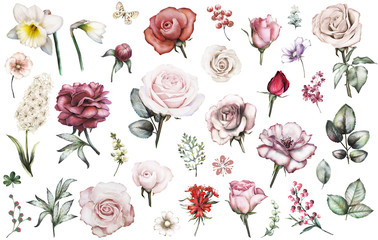 Set elements of rose, narcissus, peonies. Collection garden and wild flowers, branches, illustration isolated on white background. Leaves, berry, bud, herbs, butterfly. Watercolor style