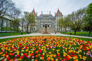 Tulips and The New York State Capitol, in Albany, New York.
