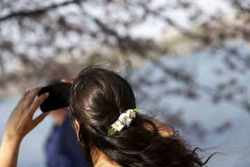A woman wearing a cherry blossom barrette in her hair takes a picture along the Tidal Basin  in Washington