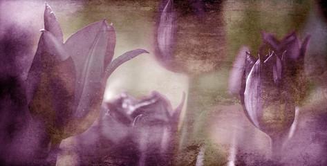 Fotoväggar - textured tinted tulips concept