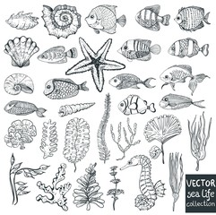 beautiful sea life collection for design