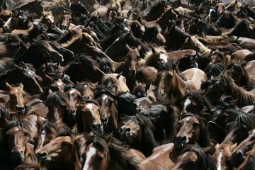 "Horses run during the ""Rapa Das Bestas"" event in Mougas, northwestern Spain"