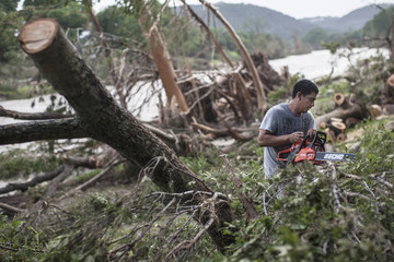 Wilber Gonzales uses a chainsaw to cut fallen tree trunks into small pieces along the banks of the Blanco River in Wimberley Texas