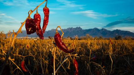 Red Chilis Fotoväggar