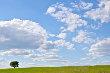 Lonely tree in the field with blue sky and clouds. Minimalism in nature.