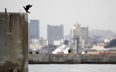 A bird perches on a wharf in Guanabara Bay, ahead of the Rio 2016 Olympic Games in Rio de Janeiro
