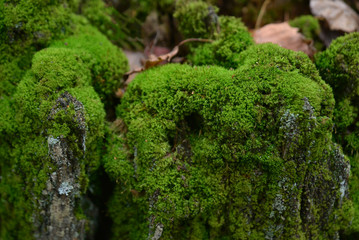 the texture of the moss