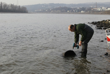 A member of the bomb disposal unit drills a hole into a partially exploded World War II bomb that was found along the partially dried-up riverbed of Europe's largest waterway the Rhine in Neuwied