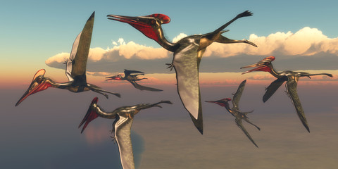 Pterodactylus Pterosaurs in Flight - A flock of Pterodactylus Pterosaurs fly out to the ocean to hunt for fish in the Jurassic Period.