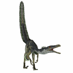 Velociraptor Dinosaur on White - Velociraptor was a carnivorous theropod dinosaur that lived in Mongolia, China in the Cretaceous Period.
