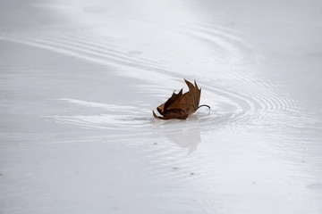 A leaf makes ripples as it is blown across the surface of water on the skating rink in Bryant Park during unseasonably warm weather on Christmas Eve in the Manhattan borough of New York