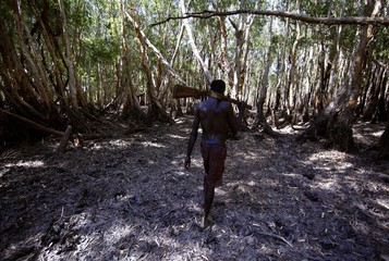 Australian Aboriginal hunter Roy Gaykamangu carries a shotgun over his shoulder as he walks through a native paperbark tree forest near the 'out station' of Yathalamarra, located on the outksirts of the community of Ramingining in East Arnhem Land