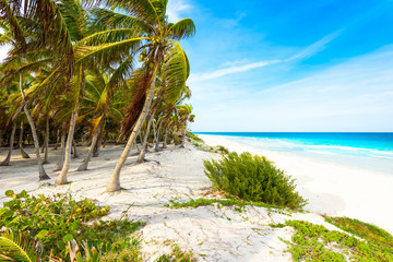 Paradise beach at caribbean coast of Mexico - tropical destination for vacation - relaxing and recreation in paradise