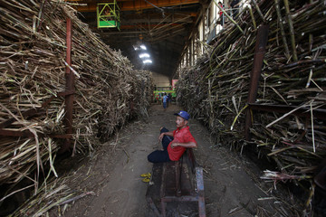 A worker sits between stacks of sugar cane at the Tasik Madu sugar mill in Solo