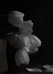 White tulips in a vase
