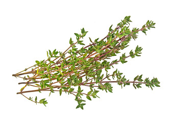 Sprig of thyme isolated on a white background