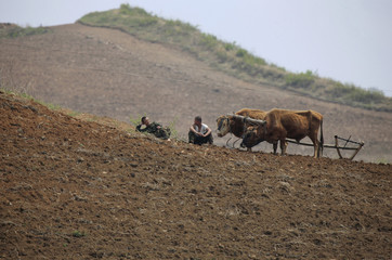 North Korean soldiers rest next to farm cattle in a field in Sinuiju, opposite the Chinese border city of Dandong