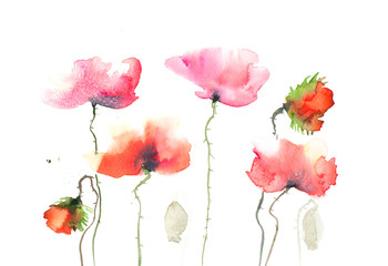 Poppy flowers on white, watercolor painting in impressionism style