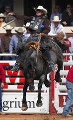 Scheer of Elsmere rides the horse Spring Planting to a first place finish in the saddle bronc event during the finals of the 101st Calgary Stampede rodeo in Calgary